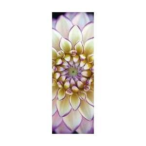 PUZZLE : DAHLIA BLANC X 1000