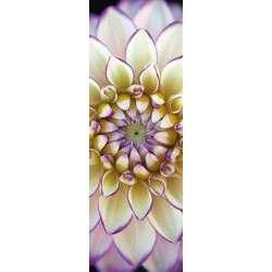 Puzzle : 1000 pièces - Dahlia blanc